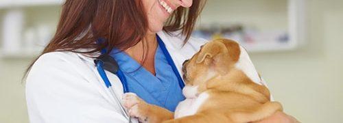 Devenez assistante vétérinaire avec Espace Concours!